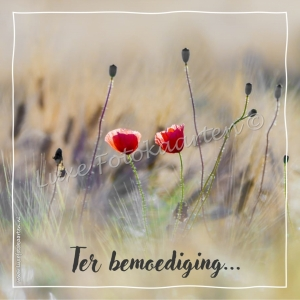 Bemoediging - Papavers