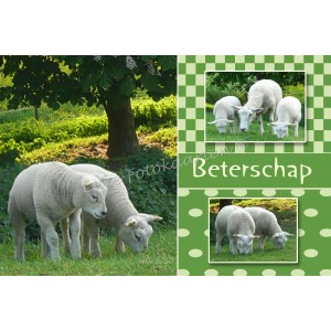 Beterschap kind - schapen